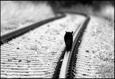freedom ©Wolfram Schubert