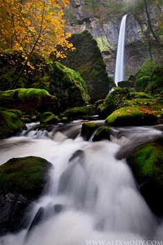 Yeon State Park, Columbia River Gorge, Oregon ~ photo by AlexMody