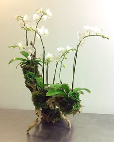 orchids and ermine 1927 Orchid Flower Arrangements, Orchid Planters, Orchid Pot, Orchid Terrarium, Orchids In Water, Indoor Orchids, Orchids Garden, Blue Orchids, Garden Plants
