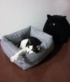 100均グッズで 猫ベッド を自作してみよう ねこのきもちweb Magazine 猫 ねこ 猫 ブログ