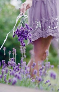 Lavanda uploaded by J ɑ ʓ ʍ í ɴ ❁⊱╮ on We Heart It Lavender Cottage, Lavender Fields, Lavender Color, Lavender Flowers, French Lavender, Purple Flowers, Lavender Garden, Lavender Aesthetic, Purple Aesthetic