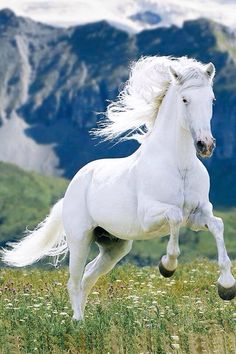 is - Animals Pictures Beautiful Horse Pictures, Most Beautiful Horses, Animals Beautiful, Cute Horses, Pretty Horses, Horse Love, Nature Animals, Animals And Pets, Cute Animals