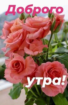 Доброе Утро, Роза, Цветы, Растения