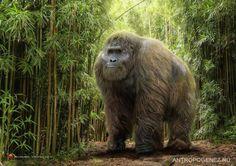 Gigantophitecus (primate hominoideo del Pleistoceno del Sureste de Asia, 1Ma) (Roman Yevseyev)