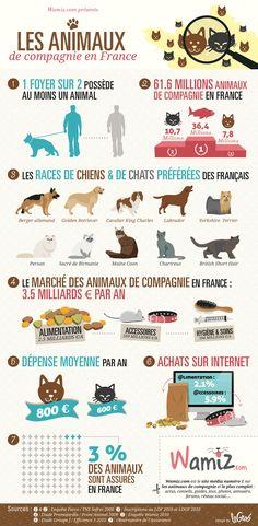 Le marché des animaux de compagnie en France (Infographie) - Société - Wamiz
