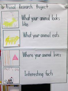 002 FREEBIE! Animal Research Graphic Organizer Teaching in