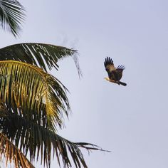 Of freedom. #blog #birds