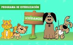 Este año la secretaría de salud cerrará con 1.000 esterilizaciones para los caninos y felinos en el municipio