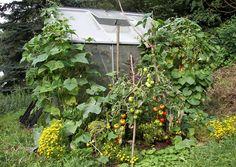 Jak zagospodarować przestrzeń wokół tunelu warzywnego w ogrodzie? Popatrzcie na ten ogród: derkleinegarten.de