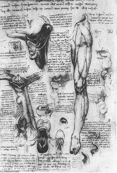 Leonardo Da Vinci-Anatomical studies (larynx and leg)