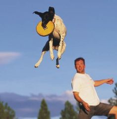 KEEN Ambassador on the Playground: JD Platt's Tails of a Flying Dog Trainer #KEENrecess