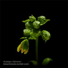 Bloomclock