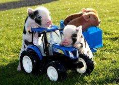Cute Small Animals, Cute Funny Animals, Animals And Pets, Baby Animals, Pug Pictures, Animal Pictures, Pig Pics, Teacup Pigs, Mini Pigs