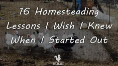 homesteading lessons main