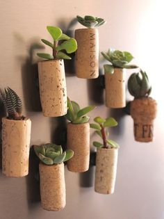 Transform your love for wine to these adorable succulent planters!