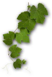 cretangastronomy.gr Greek Recipes, Parsley, Plant Leaves, Herbs, Plants, Food, Essen, Greek Food Recipes, Herb