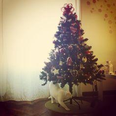 13 DIC: il mio albero di Natale. E il piccolo, candido e dispettoso nume tutelare della casa: Zazie.