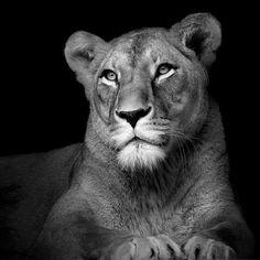 Portraits of Animals by Lukas Holas, via Behance