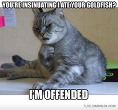 funny cat pictures with captions tumblr