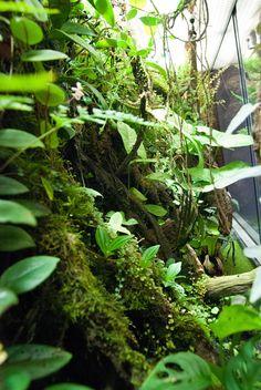 Discover recipes, home ideas, style inspiration and other ideas to try. Frog Terrarium, Aquarium Terrarium, Succulent Terrarium, Aquarium Fish, Terrarium Wedding, Terraria, Geckos, Paludarium, Frog Tank