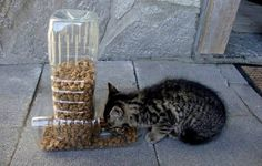 Easy to reuse PET bottles: Feeders for kittens and dogs ... just cut the bottles and fit them...