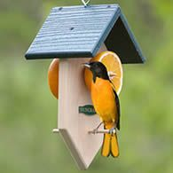 Duncraft Fruit Feeder