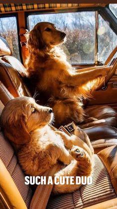 Super Cute Puppies, Cute Baby Dogs, Cute Little Puppies, Cute Funny Dogs, Cute Dogs And Puppies, Cute Funny Animals, Doggies, Cute Wild Animals, Super Cute Animals