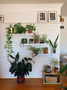 We moved house last week. This is our plant corner. - plants You are in the right place about House Moving card Here we offer you the most beautiful pictures about the House Moving aesthetic you are l Room With Plants, House Plants Decor, Plant Decor, Plant Aesthetic, Aesthetic Room Decor, Corner Plant, Plant Shelves, Moving House, Plant Wall