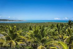 Imagem vista aérea dos coqueiros e do mar na Barra São Miguel, em Alagoas, Brasil