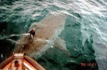 how to build a megalodon catching raft
