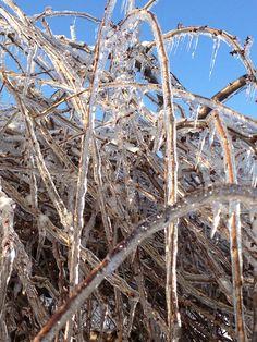 Christmas ice storm  Winter in Michigan 2013