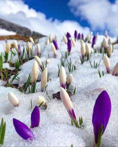 Meditation Musik, Chakra Meditation, Evening Meditation, Outdoor Winter Plants, Beautiful Flowers, Beautiful Places, Winter Flowers, Purple Flowers, Vacation Trips