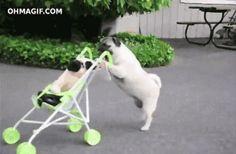 wózek & mops