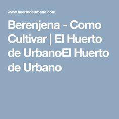 Berenjena - Como Cultivar | El Huerto de UrbanoEl Huerto de Urbano