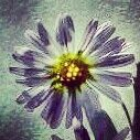 pretty lil thang Pin'd from android: http://pind.feigdev.com