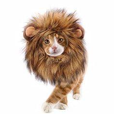 Adorable Funny Lion Mane Halloween Cat or Dog Costume Easy Dress Up Costumes MED Cute Cat Costumes, Halloween Costumes To Make, Up Costumes, Dog Halloween, Halloween Christmas, Costume Ideas, Lion Mane For Cat, Funny Lion, Dog Tutu