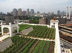 The Brooklyn Grange Rooftop Farm #2 at Brooklyn Navy Yard, Building No. 3 on July 26, 2012; Photo Courtesy of rooflite®