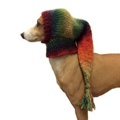 Sparkling small dog Snood, Orange, Italian greyhound snood whippet small dog hat lurcher snood, puppy clothing, dog clothes, dog accessories