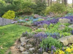 Shade garden featuring Ajuga, Sweet Woodruff, Forget-me-Nots, Primroses, and Hosta