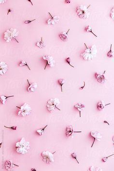 733 Best Cute Prints Patterns Design Phone Wallpapers Images