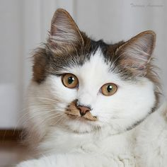 """""""Cats are the natural companions of intellectuals.  They are the silent watchers of dreams, inspiration and patient research."""" --Fernand Mery"""