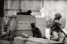 cats at Monumentale cemetery Milano Italy