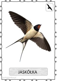 ptak3 Learn Polish, Polish Language, Bird Design, Beautiful Birds, Kids Learning, Montessori, Poland, Activities For Kids, Kindergarten