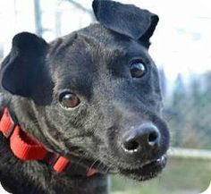 Washington, DC - Patterdale Terrier (Fell Terrier) Mix. Meet Cubby, a dog for adoption. http://www.adoptapet.com/pet/17124843-washington-dc-patterdale-terrier-fell-terrier-mix