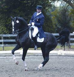 Donarweiss Ggf - Hanoverian horse 2001, Black - 16.0 hand Heart's Daddy......