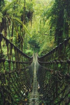 TAIWAN - Can't wait to be here. I even got butterflies in my tummy thinking about it! Rope Bridge in Taiwan Rope Bridge, Taiwan Travel, Thinking Day, Gothic Architecture, Bridges Architecture, Historical Sites, Adventure Time, Adventure Travel, Paths