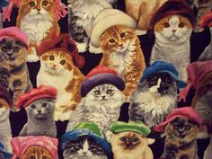 {cats with fancy hats} this is fabric. it made me LOL :)