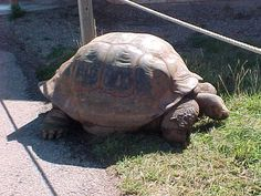 Rapid City, SD Reptile Gardens
