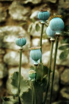artful gardening - seedheads add interest to your plot