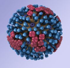 A genetic blueprint of influenza virus
